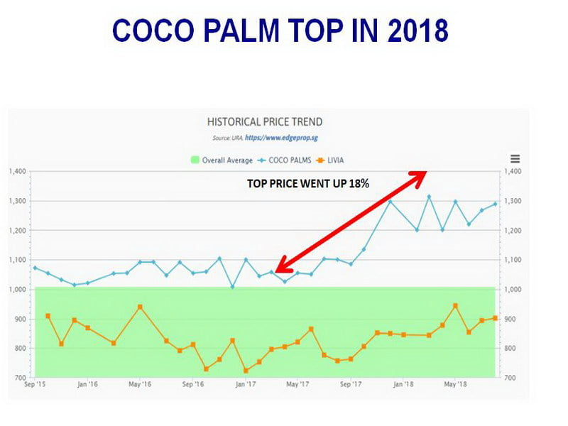 coco palm TOP